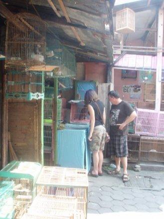 2009-bird-market-yogyakarta-indonesia-1936838_1172534840412_8360587_n